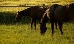 BlackMo Ranch